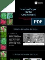 Intoxicación Por Plantas Ornamentales Presentación
