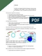 Preparación Vector de Clonacion Tipos de Vectores
