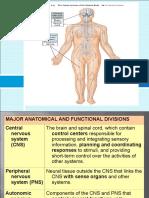 Nervous System [Dr.pipiet]