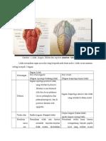 Anatomi, Histo, Fisio Lidah