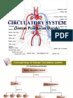 04. Circulatory System