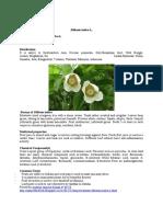 Deskripsi Dillenia Indica L