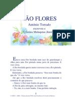08 01 São Flores
