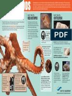 octopus handout