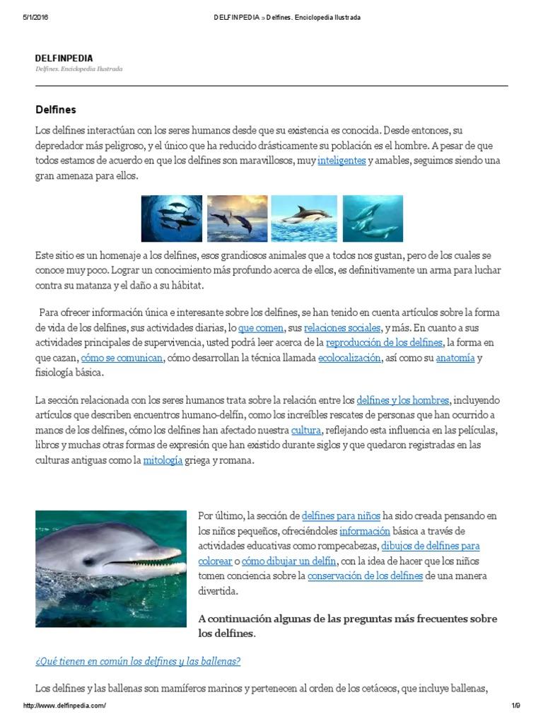 Delfines Al Agua