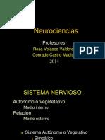 Medula Espinal 2014