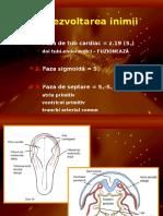 Embriologie Sistem Cardiovascular