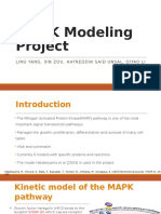 Computational Model for MAPK pathway