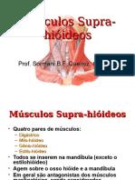 Músculos Da Supra-hióideos