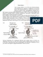 Curs 10 Imuno.pdf
