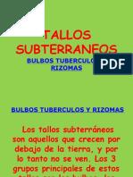 Morfología Vegetal. Bulbos, tubérculos y rizomas.