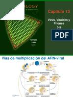 Virus, Viroides y Priones