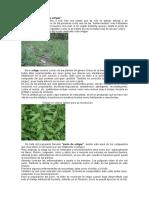 insecticidas biológicos