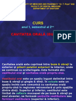 Cavitatea orala