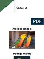 Passaros