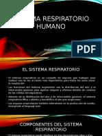 control 3 anatomofisiologia humana y primeros auxilios