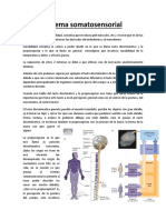 Sistema Somatosensorial y Termalgesia