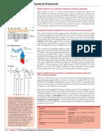 Sepsis PDF