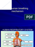 human breathing mechanism.ppt