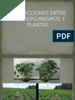 s3-Interacciones Entre Microorganismos y Plantas