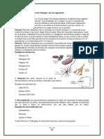 Los Niveles de Organización Biológica