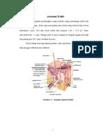 Anatomi Kulit