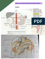 Duodeno y Páncreas, Vascularización e Inervación