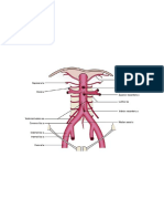 Abdominal Arteries Diagram