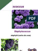 Staphylococcus 2014 Vet
