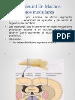 Mecanismos Medulares y Cerebrales