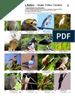 Guia Aves de Colombia