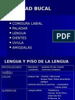 Cabeza-cavidad Bucal Dr. Díaz