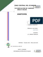 Taller Grupal Anatomia Completo