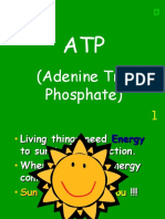 atp photosynthesis respiration