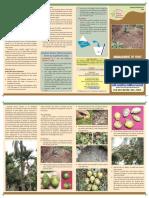 Extension Folder No-67-Arecanut Fruit Rot
