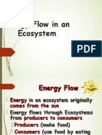 01 food energy through ecosystems
