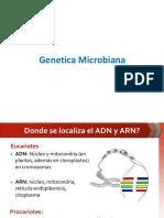 Genetica Microbiana