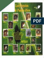 Los Coquíes de Puerto Rico