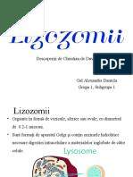 Lizozomii