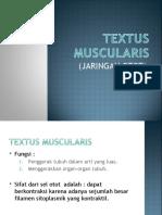 TEXTUS MUSCULARIS