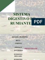 Sistema de rumiantes II