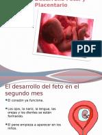 Desarrollo Fetal y Placentario