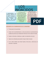 Funciones de Los Aminoácidos en El Organismo