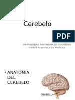 Cerebelo II