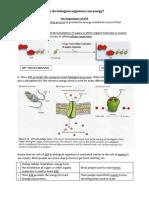 copyofcellularrespiration-madisonmacdonald docx