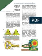 14. Proteinuria - Fisiopatología II