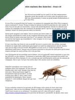« Débarrasser votre maison des insectes