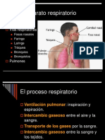 aparato respiratorio humanos