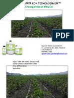 cultivo de papaya con EM - VALLE DEL SANTA CHIMBOTE.pdf