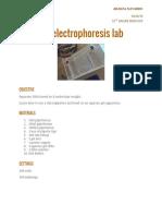 gelelectrophoresislab  1